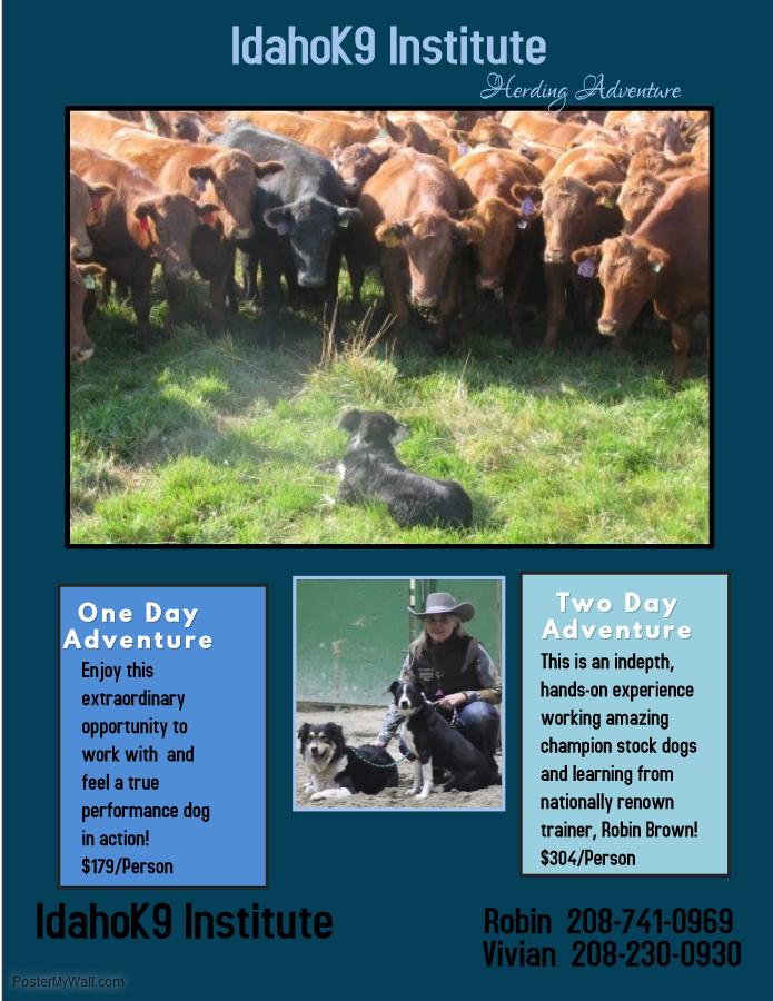 Herding Adventure 1