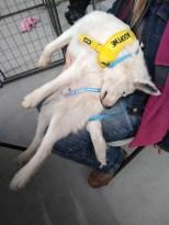 Levi PetSmart Adoption Weekend requires naps!